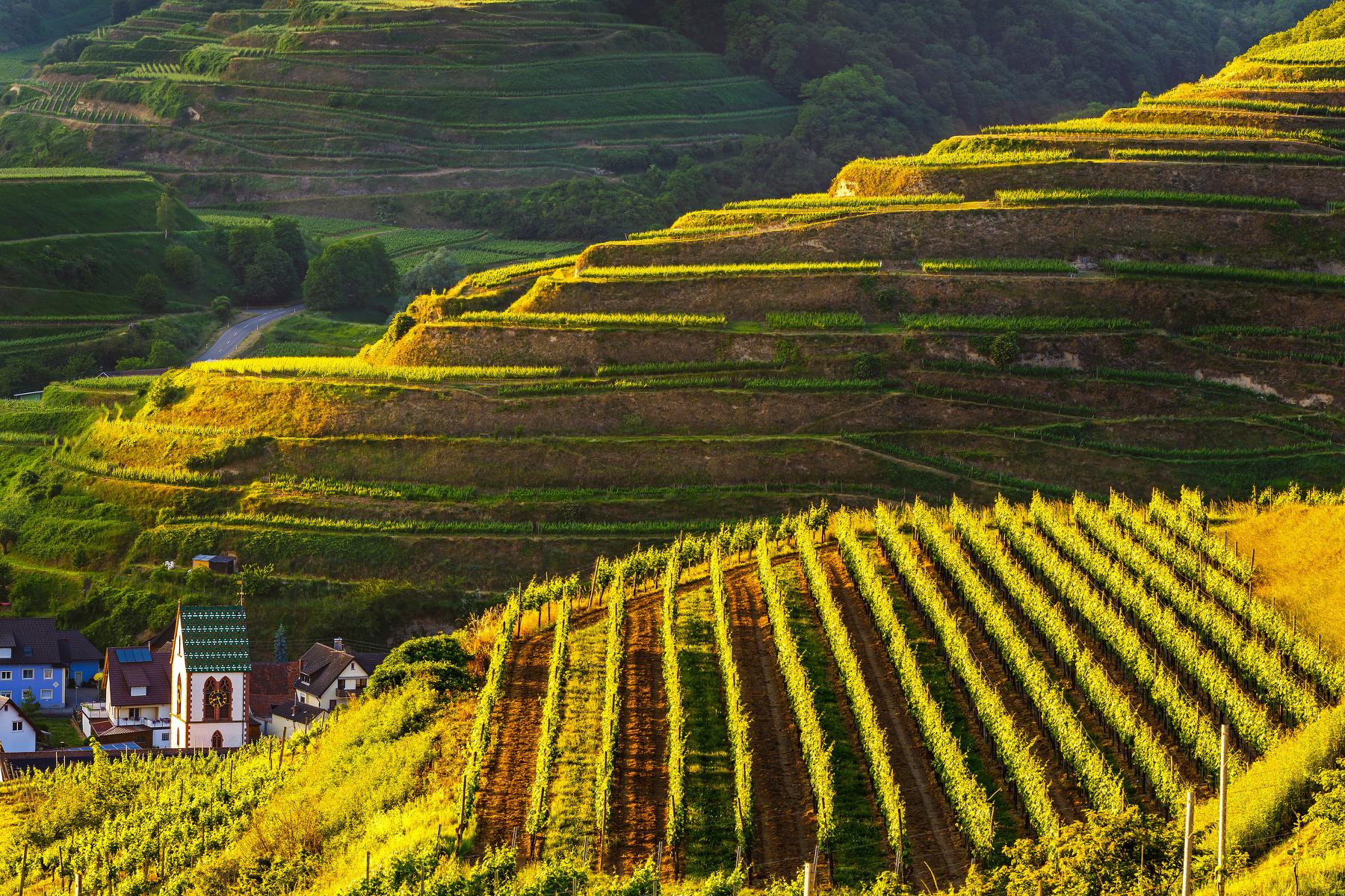 Landschaft am Kaiserstuhl - von Menschenhand geschaffen (Foto: FunnyStudio Fotolia)